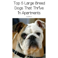 Small Crop Of Best Dog Breeds For Apartments
