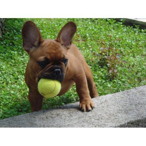 Medium Crop Of Dog In French