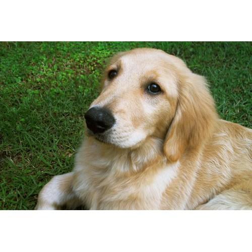 Medium Crop Of Too Cute Puppies
