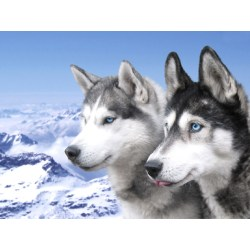 Small Crop Of Dogs With Blue Eyes
