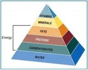 canine food pyramid 2