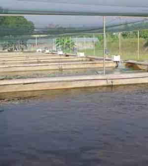 Bisnis Modal Kecil Untung Besar : Usaha Ikan Bibit Air Tawar