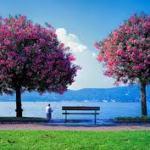 ये पेड़ों के पत्तों को आज Hindi Poetry on feeling Sad