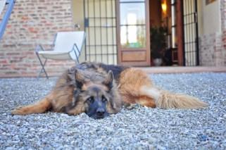 Runa, the beautiful family dog.