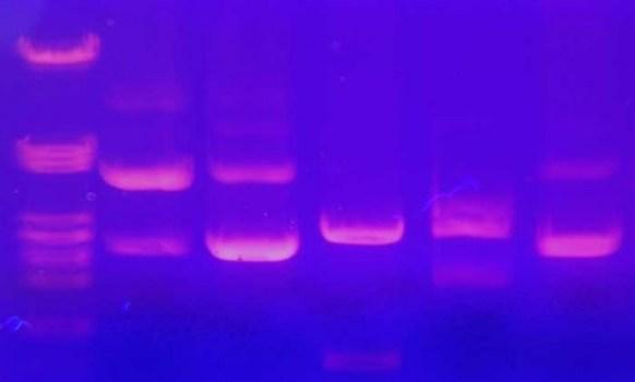 9380_Gel-Electrophoresis-002-628x376