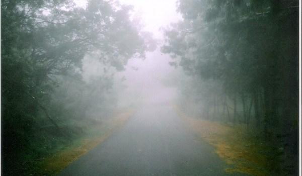 Fog_on_a_road_in_Kodaikanal