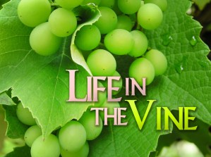 Life in the Vine_T_NV