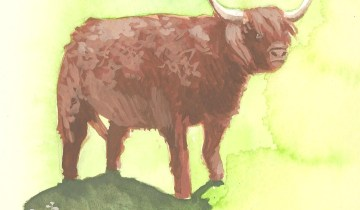 Scottish Highland Cow (gouache on watercolor paper)