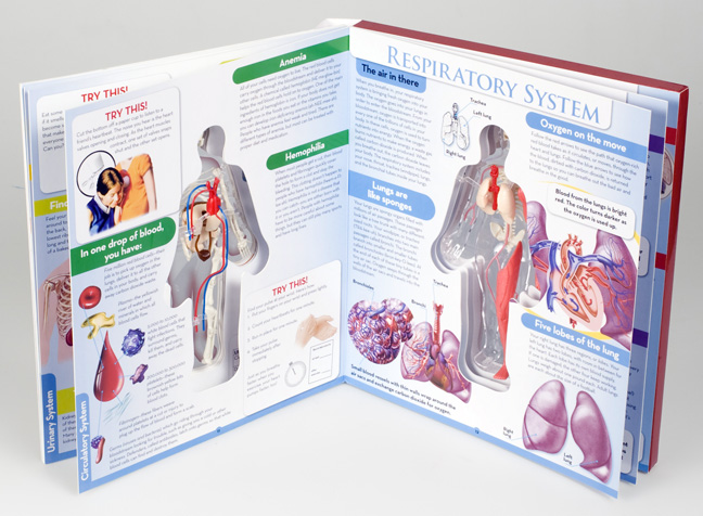 Best Anatomy Books For Kids Doodles And Jots