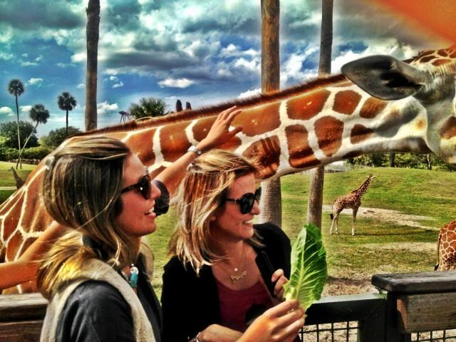 passei-girafa-bush-gardens-ana-lembo