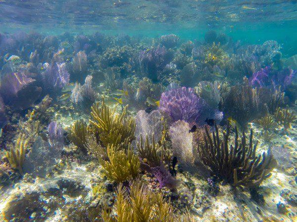 coral do NIZUC