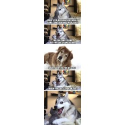 Small Crop Of Joke Dog Meme