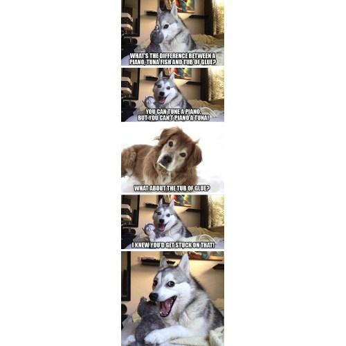 Medium Crop Of Joke Dog Meme