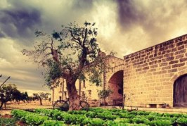 Scuderia Terra degli Ulivi: l'eccellenza del salto ostacoli a Ruvo di Puglia