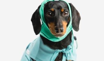 Keeping your Pet Healthy– Avoiding Fleas and Ticks Get help from Your Vet #NoBiteIsRight #sp