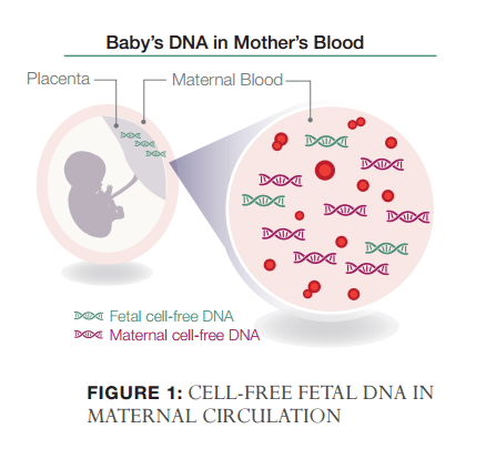 Natera cell free fetal dna