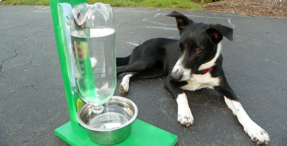 dispensador de agua para perros