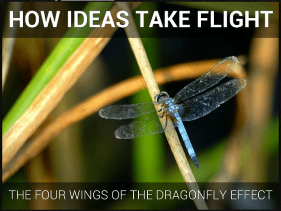How Ideas Take Flight