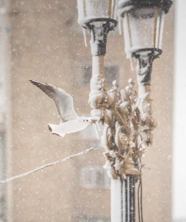 Iarna în București - Primele fotografii 23
