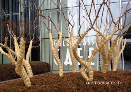 wrapped Korean trees