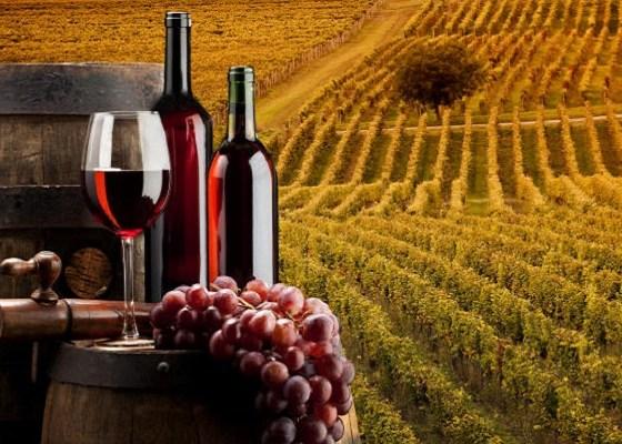 Cursus Voor Het Wijnbrevet (Wijncursus SDEN 3 / SWEN 3)
