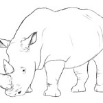 How To Draw A Rhino