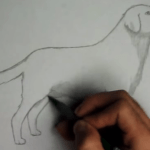 How To Draw A Dog – Video