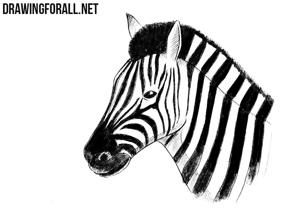 How to Draw a Zebra Head   DrawingForAll net How to draw a zebra head