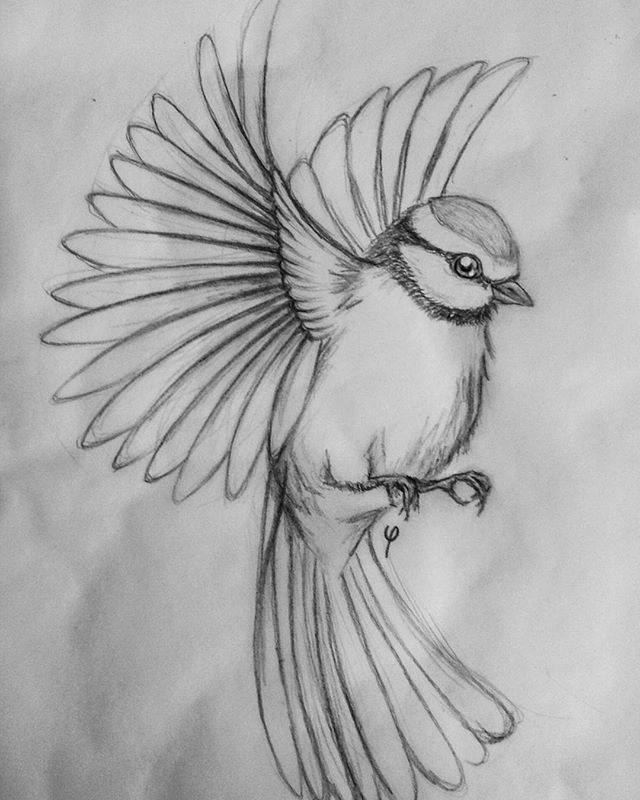 Flying Bird Drawing Pic   Drawing Skill Flying Bird Drawing Pic