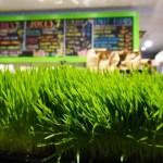 Plant Matter Kitchen Vegan Restaurant of My Dreams