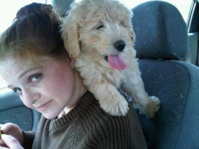 Me and Honey - f1 Goldendoodle first car ride..