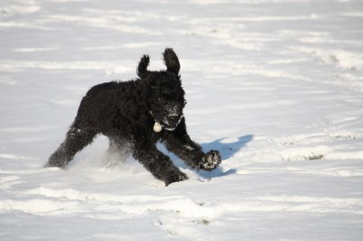Watch Out! Doodle In the Snow!
