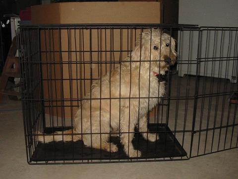 36 inch dog crate