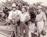 Lodi Harvest, Historical Image