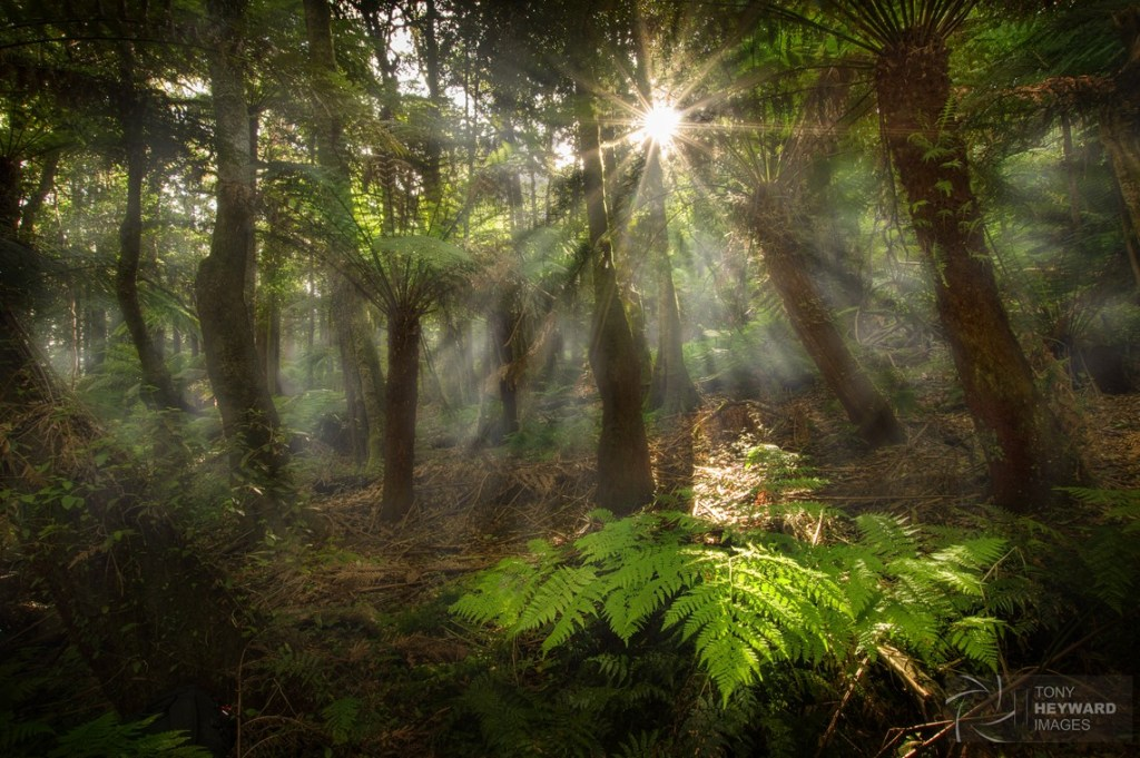Jurassic Forest, Cathedral of Ferns - Blue Mountains, New South Wales.