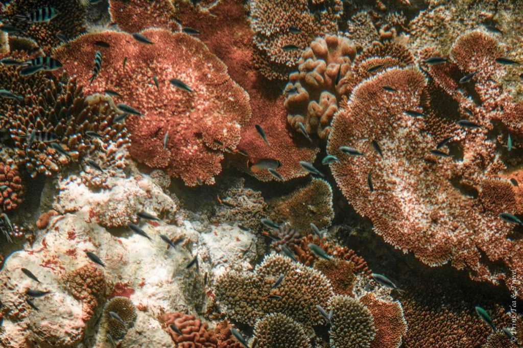 Coral at the Great Barrier Reef, Queensland, Australia