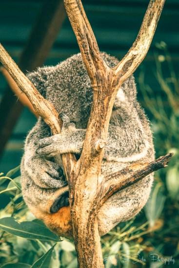 Australia Brisbane-6851