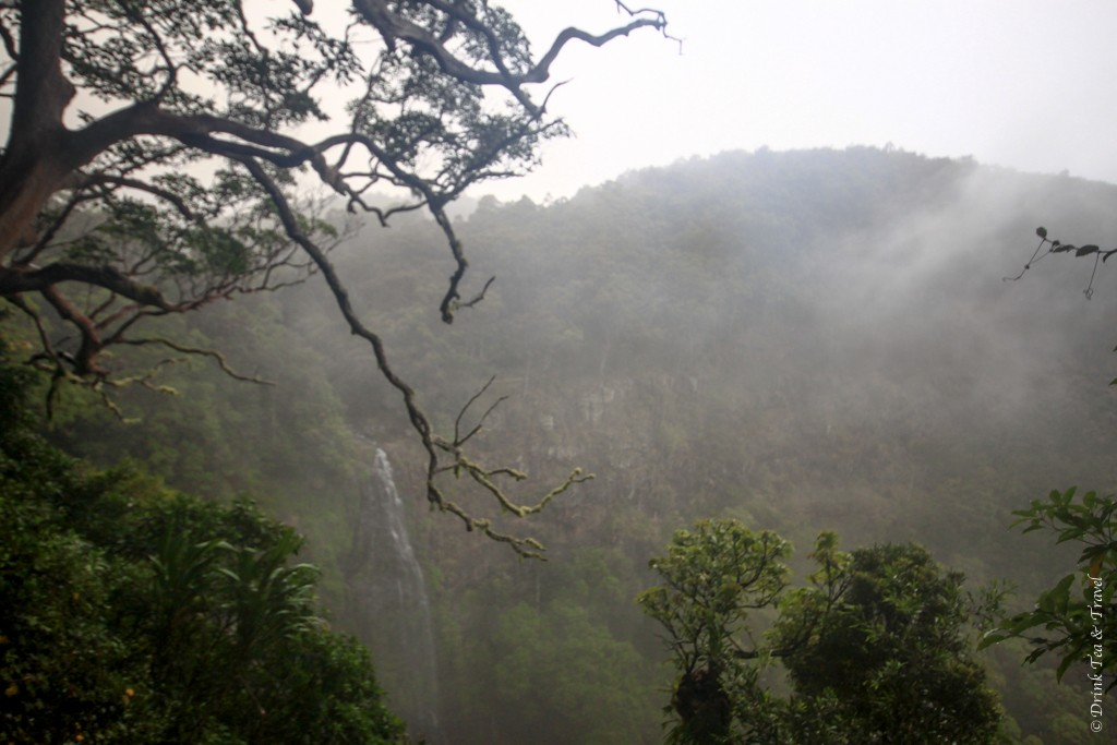 A rainy day in Lamington National Park, Queensland, Australia