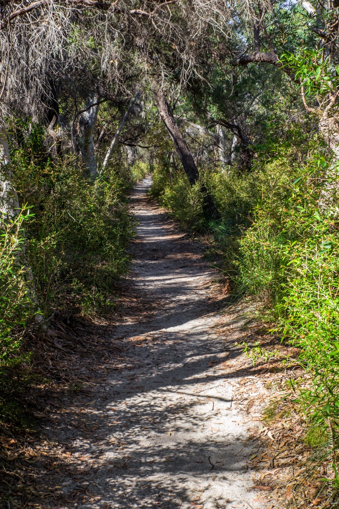 Tanglewood Track, Noosa National Park