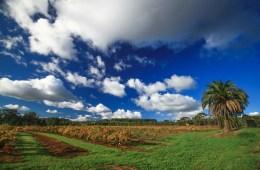Barossa Australia. Cover Photo