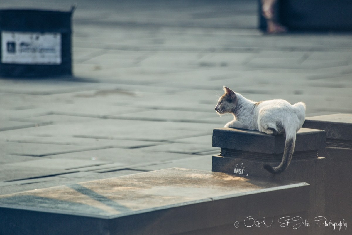 Stray cat enjoying the warm sun rays n Taman Fatahilah, Old Jakarta