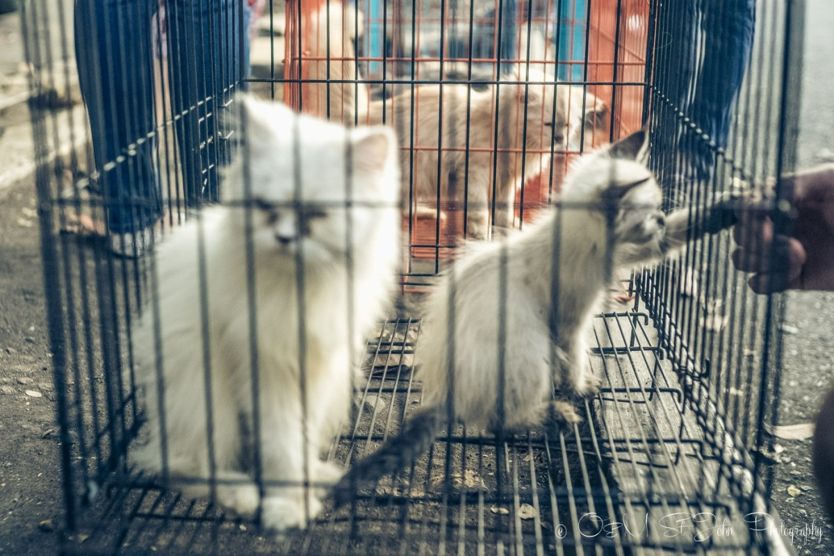 Kittens for sale at the Malang Bird Market, East Java, Indonesia