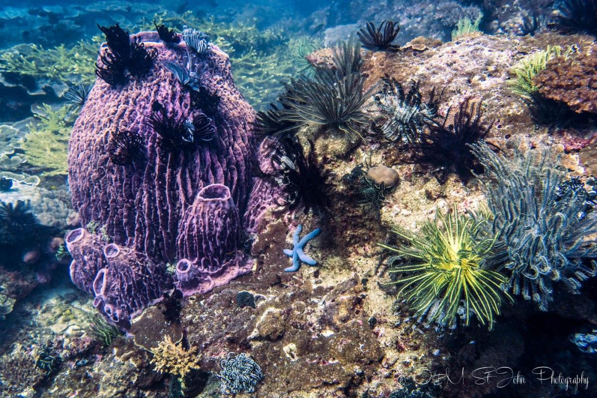 Mayne Rock with Bigfin Divers. Sabah. Malaysia