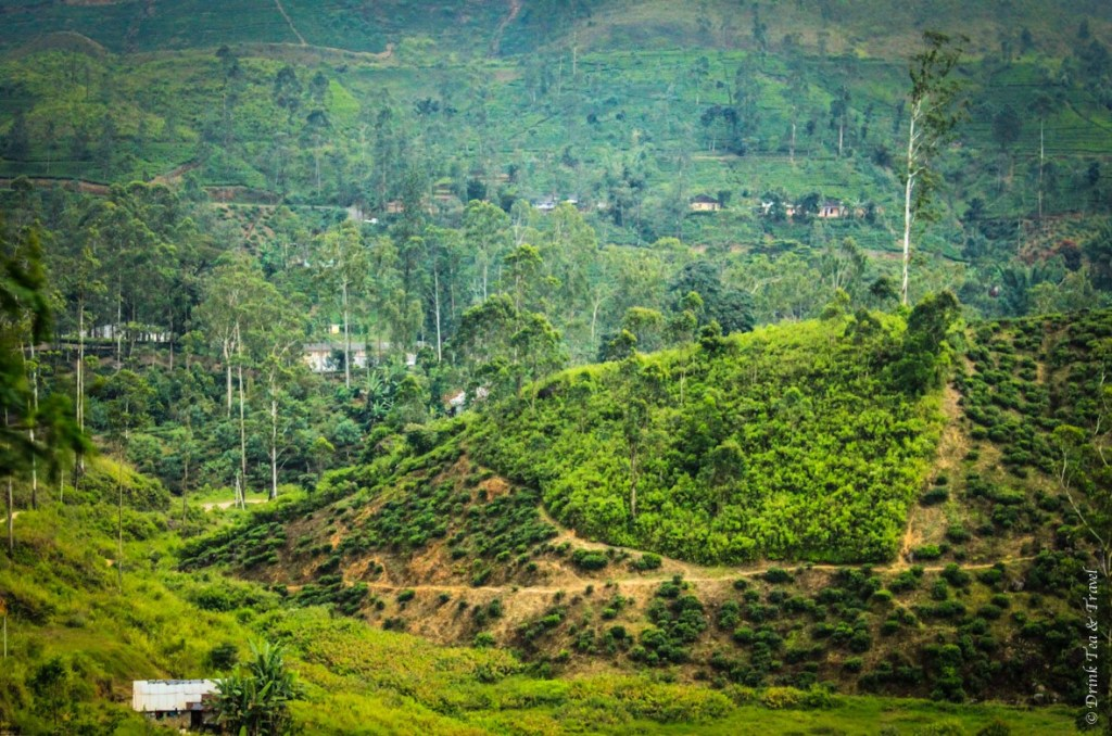 Travel to Sri Lanka: Lush greenery of the Kandy Region, an area known for its national parks and tea plantations