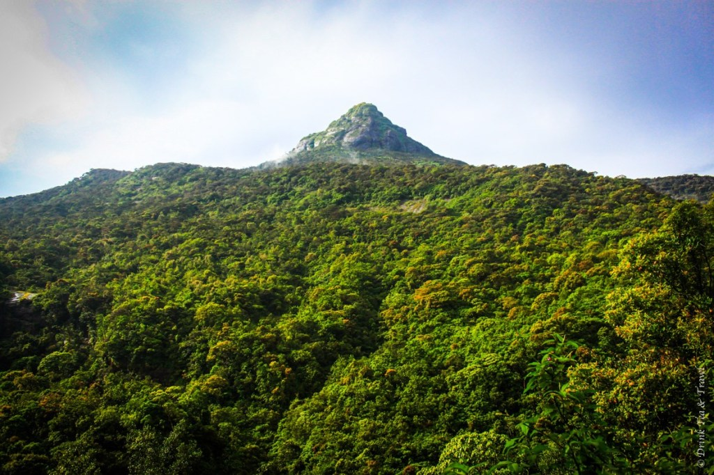 Sri Pada (Adam's Peak) from afar. The path to the top consists of over 5,000 steps, yet hundreds of thousands of locals and travelers clim to the top of this peak on a yearly basis