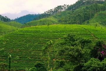 Sri Lanka Cover Photo-5238