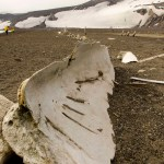 Whale Bone at Whaler's Bay, Deception Island