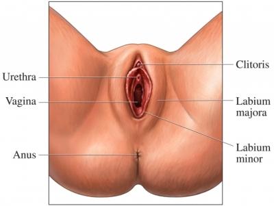 girls clitoris development stages
