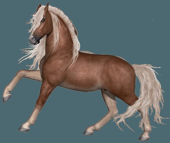 abbastanza Cavallo: immagini e disegni da stampare - JN67