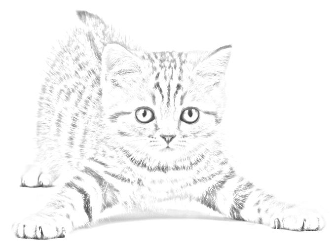 Gatto disegni da stampare e colorare for Immagini gatti da colorare